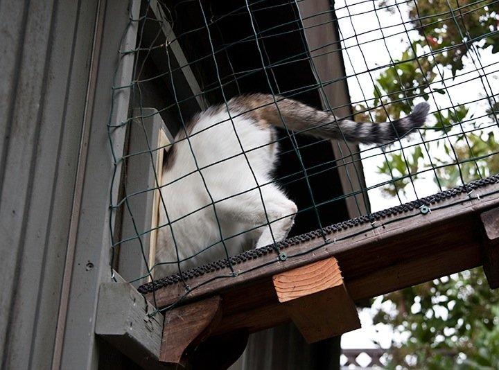 Cat getting inside a cat door