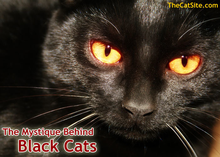 The Mystique Behind Black Cats Thecatsite