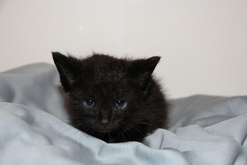 kitten bathtub